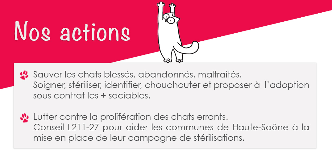 actions-adopte-1-chat